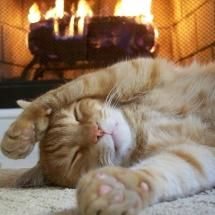 Image result for images of cosy funny cats