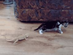 42 Cat GIFs Guaranteed To Make You Laugh Every Time