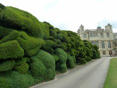 Wonderful Yew hedge at onne of England's finest country houses, Audley End, in Suffolk