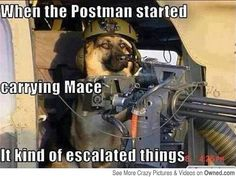 http://slimdoggy.com/what-is-it-with-dogs-and-the-mailman/