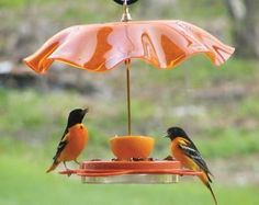 Oh my Clementine... this bird feeder is versatile enough for year round use! Fun fruit and jelly feeder comes with removable glass dish for grape jelly, it's orioles' favorite, and two spikes for oran