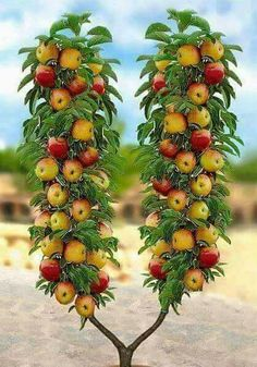 Timbiriche Caraguata O Piñuela Fruta De Bromelia Pinguin Frutas