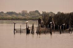 Forgotten lands. #Ravenna #nature