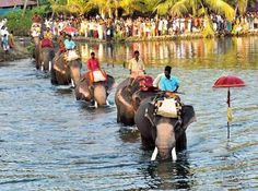Elephants crossing the Edachal channel of the Ashtamudi Lake, Kerala.