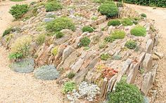 The centenary crevice garden at Wisley reinvents the rock garden says Ambra   Edwards