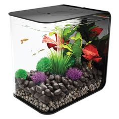 You'll find the BiOrb FLOW Black 15 Liter w/ LED Fixture a really easy aquarium to set up and own. Everything you need to start your aquarium is included in the box. It uses the tried and tested BiOrb filtration and also has a built-in LED light. Klein Aquarium, Acrylic Aquarium, Tropical Fish Aquarium, Aquarium Design, Biorb Fish Tank, Conception Aquarium, Saltwater Aquarium Beginner, Pet Fish, Pisces