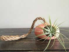 Coral Ceramic Wheel Thrown Air Plant Holder by ArtByJenF on Etsy