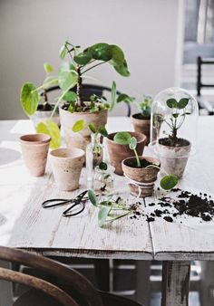 Hvornår ændrer blomsterbutikkerne mon navn til plantebutikker?! Er der ikke snart en der laver en app, hvor man kan se, hvor de populære planter kan købes? Og plantebutikkerne skal inddeles efter, hvor lette (svære) planterne er at dræbe, og hvor meget (lidt) de skal vandes. Årets navn....