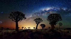 Quiver Trees by Night (by Florian Breuer)