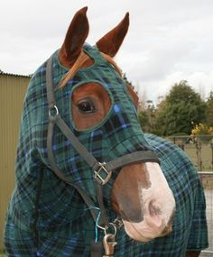 All my ponios wear hoods and neck covers, I particularly like this tartan outfit.