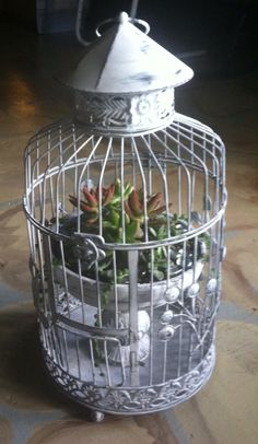 I was just telling my mother that i wanted to use a succulent garden for my t - Decoration cage oiseau ...