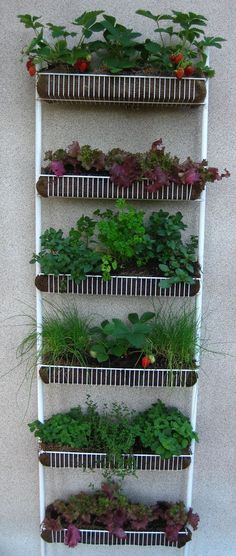 Vertical Gardening: Plant a Kitchen Spice Rack More