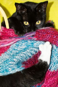 My cat wrapper around my scarf. I Am Cold, Gremlins, Kitty Cats, My World, Dog Cat, Dogs, Animals, Animales, Animaux
