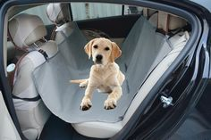 Paws 'N More Waterproof Hammock Pet Car Seat Cover - LIFETIME WARRANTY! * Continue to the product at the image link.