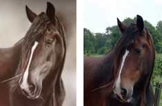 "Master Coffee/Marcel Wagner on Instagram: ""Sam was my tallest draft horse with 192 cm. Painted with coffee #horse #horselove #horselover #shirehorse #drafthorse #coffee #coffeeart…"" Shire Horse, Draft Horses, Horse Love, Coffee Art, Marcel, Portrait, Painting, Animals, Instagram"