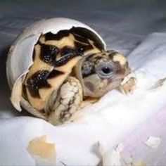 Baby turtle....so cute!