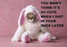 oh gosh....poor kitty