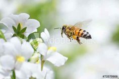Our food supply depends on the hard working honey bee. Colony Collapse Disorder is threatening the honey bee population. We must all do our part to help save the honey bee. Drone Bee, Beekeeping For Beginners, Bee Supplies, Bee Creative, Bee Friendly, Animal Wallpaper, Bees Knees, Queen Bees, Bee Keeping