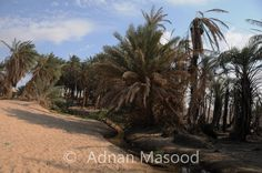 Elim aka Maqna Saudi Arabia aka Oyun Mousa which means Springs of Moses: Then they came to Elim, where there were twelve springs of water and seventy palm trees; and they camped there by the water. -Exodus 15:27(NRSC)