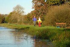 Dromore Wood Loop   Activities   Walking   Looped Walks   All Ireland    Republic of d9034ae8573