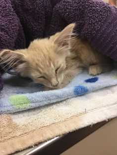 """A kitten was found left in a box on the curb on a hot summer day this June. A good Samaritan from Texas was shocked to hear meowing coming from the box.imgur/tireddad1967There was a note on the box that read: """"Free to anybody that wants her."""" Upon investigation, the woman found a tiny kitten inside ..."""