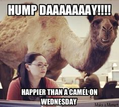 Hump Day quotes quote days of the week wednesday hump day hump day camel wednesday quotes happy wednesday