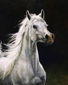 by Mirelle Vegers Oil Paint On Wood, Painting On Wood, Horse Artwork, Horse Paintings, Pictures With Horses, Cute Doodles, Dark Backgrounds, Beautiful Horses, Art Drawings