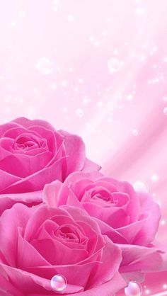 By Artist Unknown. Beautiful Rose Flowers, Beautiful Flowers Wallpapers, Beautiful Nature Wallpaper, Cute Wallpapers, Rose Flower Wallpaper, Flower Backgrounds, Wallpaper Iphone Cute, Colorful Wallpaper, Screen Wallpaper