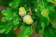 For diabetes … With research on plants … – Naturel Foods Research, Diabetes, Herbalism, The Cure, 1, Herbs, Fruit, Health, Garden
