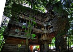 80房間三層樓高約100呎的……樹屋