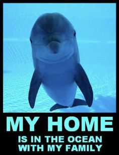 My home is in the ocean with my family, not in captivity.