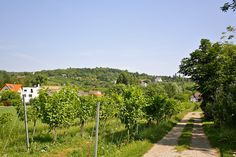 Online Magazine, Vienna Austria, Homeland, Vineyard, Country Roads, Places, Outdoor, Old Pictures, Other
