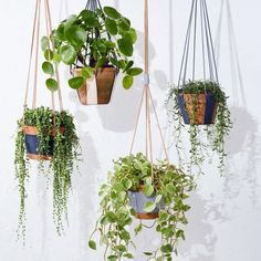 love a modern macramé planter, the boho maxi dress of the botanical world, for hanging up plants on a porch or patio.We love a modern macramé planter, the boho maxi dress of the botanical world, for hanging up plants on a porch or patio. Hanging Plants Outdoor, Diy Hanging, Hanging Baskets, Hanging Gardens, Potted Plants, Indoor Plants, Porch Plants, Flower Plants, Shade Plants