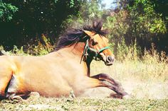 #polishhorse #polishfun #horse #horsehair