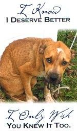 The sadness in this dogs eyes is heartbreaking , stop cruelty to all animals!