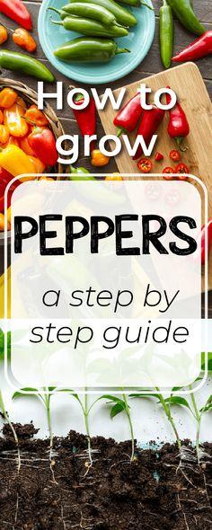 How to grow peppers #garden #gardening #growyourmint