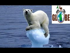 Polar bear survival documentary PART 1 - exiled ICE BEAR faces his longest struggle/journey He is the most dangerous predator of the Arctic. Now the Ice Bear. Animal Captions, Funny Animals With Captions, Funny Animal Quotes, Funny Animal Pictures, Animal Funnies, Dog Pictures, Funny Images, Funniest Animals, Funny Pictures For Kids