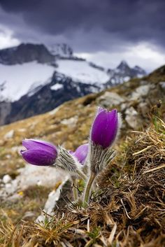 Alps moment love