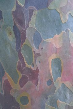 gum tree bark - Google Search