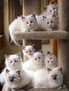Demaciados gatitos hermosos!!!!!!                                                                                                                                                      Más