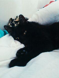 Hoppy getting ready to sleep.