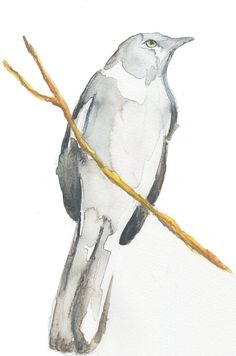 bird art watercolor illustration print   bird on a twig by claire