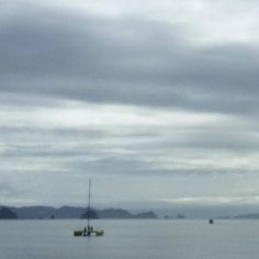 Always something happening on the way to town in #whitianga