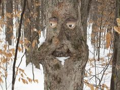 """""""Tree with Facial Expression! Tree Carving, Wood Carving, Unique Trees, Unique Art, Weird Trees, Tree Faces, Tree People, Unicorn Pictures, In Natura"""
