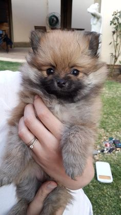 I am the cutest puppy in the world!
