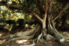 28 Beautiful Tree Images