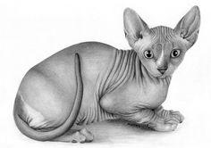 Cat. Sfinks. A4, pencil hb