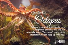 I took Zimbio's quirky spirit animal quiz and I'm a Octopus! What are you?null - Quiz