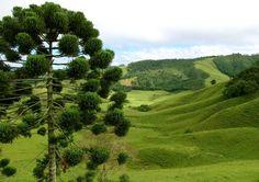 Amo Monte Verde - MG