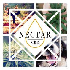 Nectar CBD promotes natural wellness for the whole family! #nectarcbd #cbd #cbdoil #cbdnectar #nectarsweet #hemp #hempextract #hempoil #fullspectrum #distillate #sustainable #organic #cannabis #farming #colorado #science #nature #natural #healthyeating